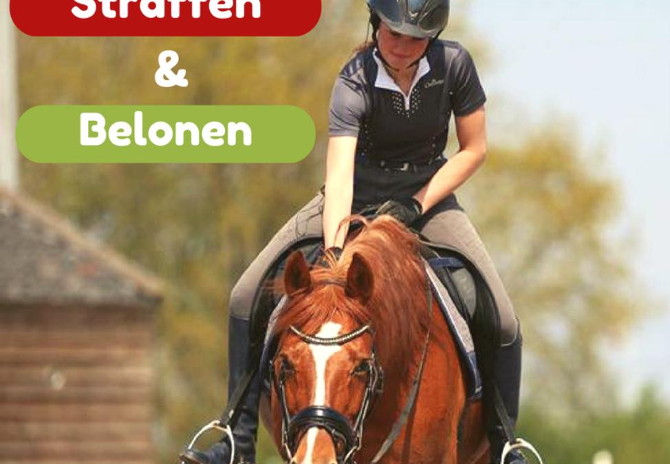 Straffen en belonen > Hoe leert mijn paard?